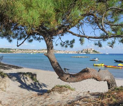camping corse situé en bord de mer